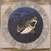 shark_tn